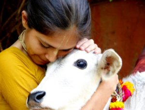 Cows-are-loved-in-india9797