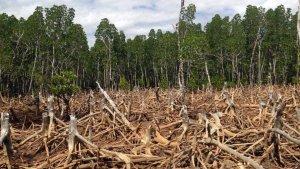 Deforestation764576